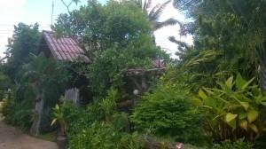Viidakkomajamme kuvattuna noin 10 metrin etäisyydeltä.