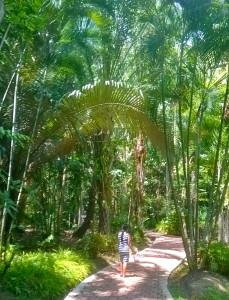 Kuninkaiden temppeliä kiertävä polku on hyvin hoidettu ja erittäin vihrea.