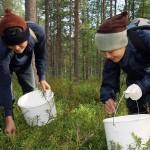 Thaimaalaiset marjanpoimijat työmaallaan suomalaismetsässä.