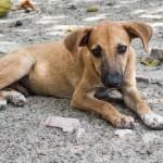 Stray-dog-Thailand2